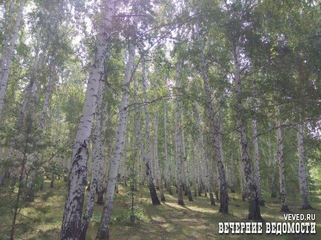 На выходных полиция проведет рейды по лесным массивам Екатеринбурга